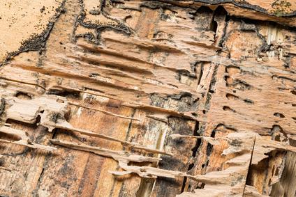 How Often Should I Get A Termite Inspection Arrow