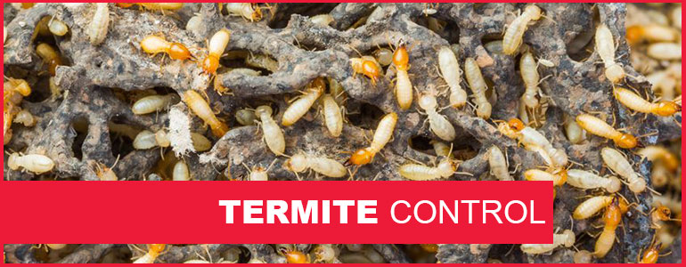 Baton Rouge Termite Control Arrow Termite Amp Pest Control